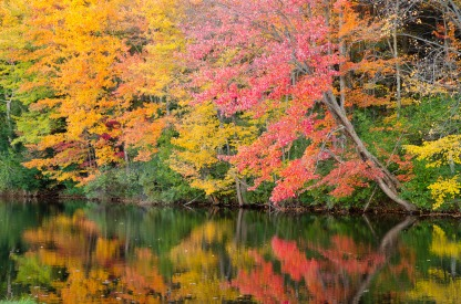 Image result for New england Fall