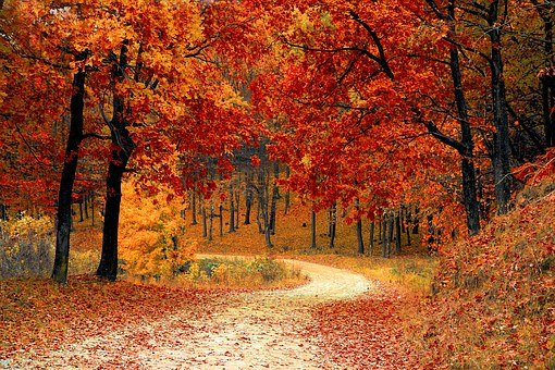 This image has an empty alt attribute; its file name is fall-1072821__340-1.jpg